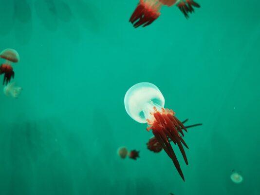 Océans : Que savez-vous sur les méduses ?